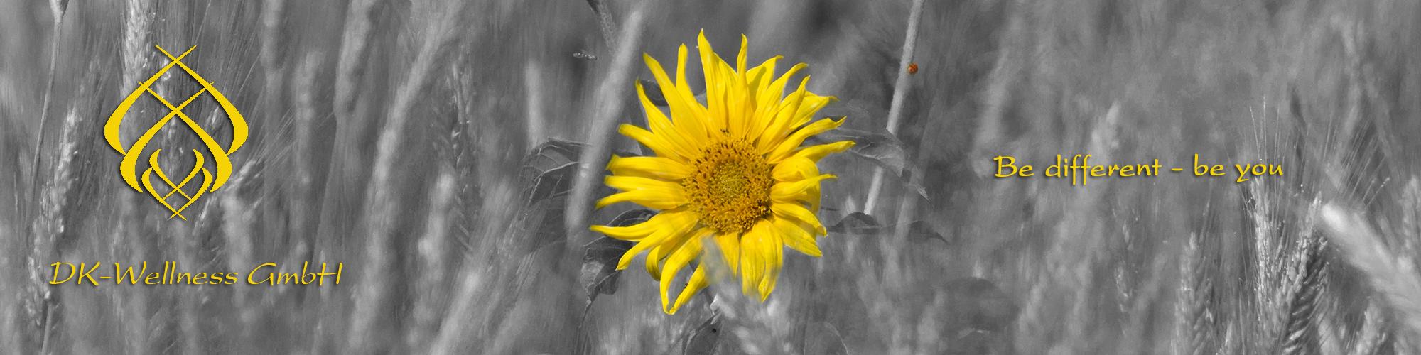 header bild sonnenblume